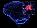 علوم اعصاب کاسپین