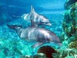 زیست شناسی دریا